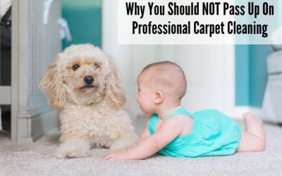 Why You Should NOT Pass Up On Professional Carpet Cleaning