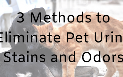 3 Methods to Eliminate Pet Urine Stains and Odors