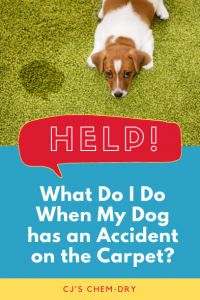 Help! What Do I Do When My Dog has an Accident on the Carpet?