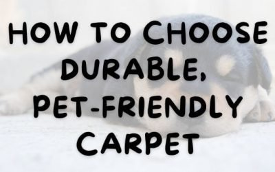 How to Choose Durable, Pet-Friendly Carpet